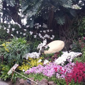 display España International Orchid Show Shanghai 2016, medalla de Bronce,