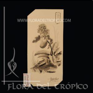 LOI 08 flora del tropico tienda deco orquideas - lamina aguada tinta - flora del trópico tienda de Orquídeas de colección