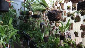 Invernadero de producción N1. Flora del Trópico